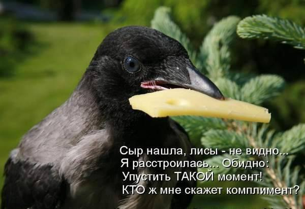 про животных смотреть: