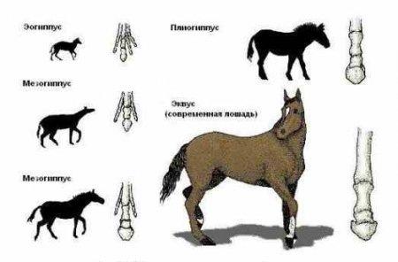 лошади фото дубна