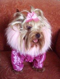 Favourite Dog, Санкт-Петербург, id27116490