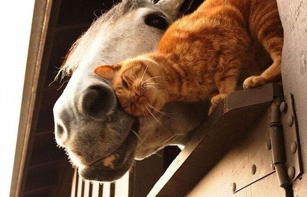 Немного о животных) Siev_st4rBI