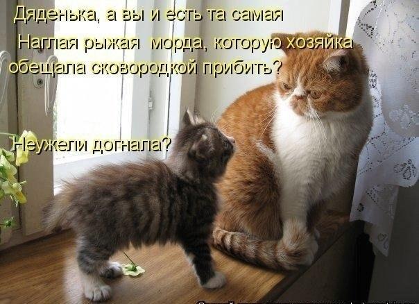 http://cs5925.userapi.com/u5901442/-14/x_175d3fdf.jpg
