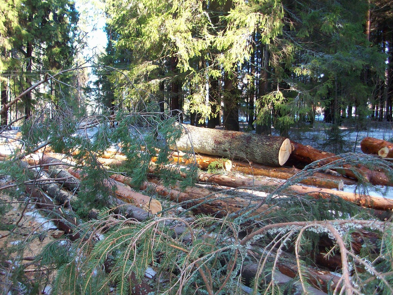 Вырубка леса