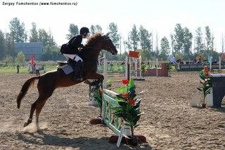 Бизнесмен Дмитрий Титов ушел в отставку с поста президента Федерации конного спорта России.