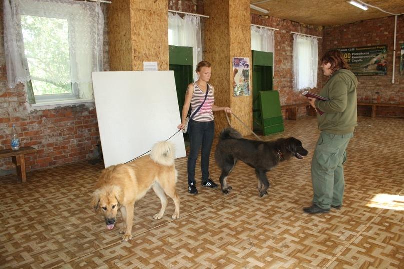 Цeнтp дрессировки собак в Красном Селе
