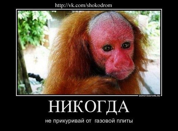 Ха ха приколы, бесплатные фото, обои ...: pictures11.ru/ha-ha-prikoly.html