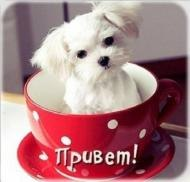 Приветик)))*