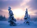 Прекрасные зимние пейзажи, чудесная зимняя проирода на высокого качества...