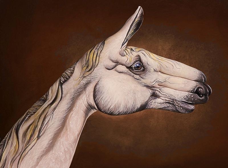 Лошадь руками человека