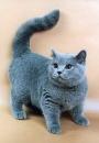 Дешвые плюшевые игрушки самара: сшить кота, ходящие игрушки.