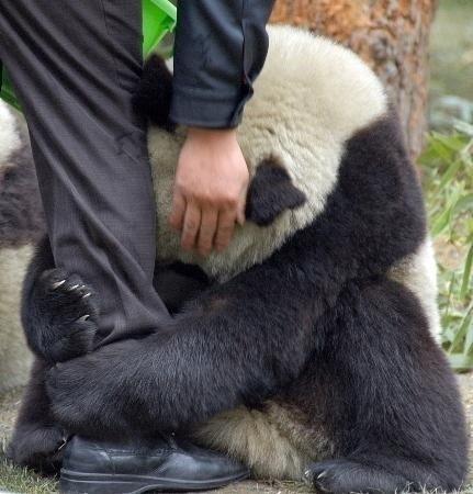 Японец жалеет панду,напугавшуюся от землетресения