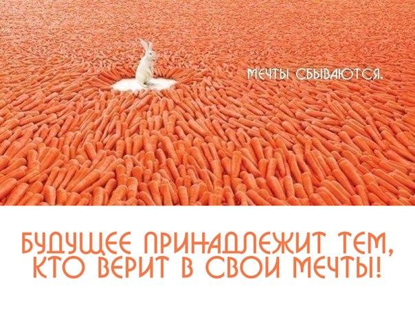 http://cs5983.userapi.com/u6021812/-14/x_c3b04db8.jpg