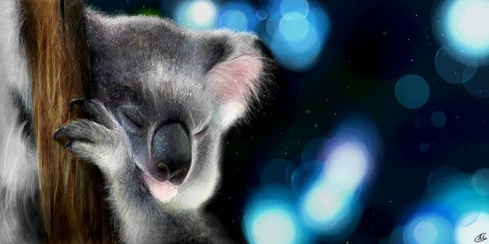 Живое граффити коала