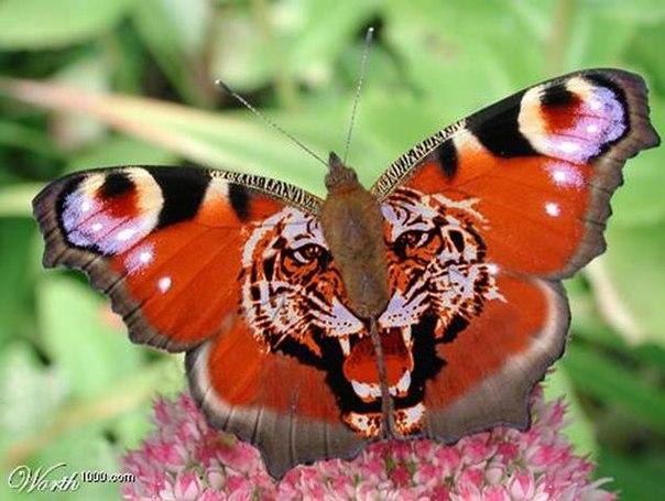 Красивые и необычные животные мира