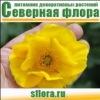 """Цветы """"Северной флоры"""""""