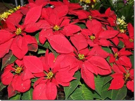 Токсичные домашние растения