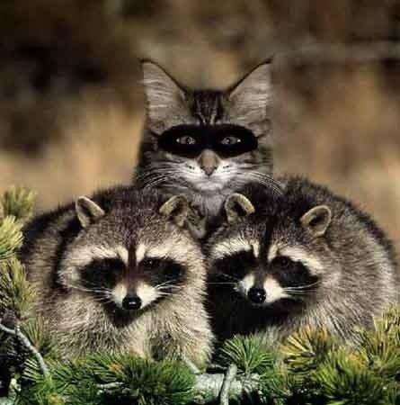 Картинка на якій треба знайти кота