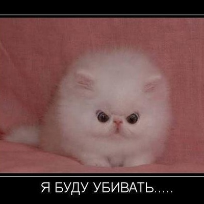 Пахан Филипович, 28 февраля , Челябинск, id136481093