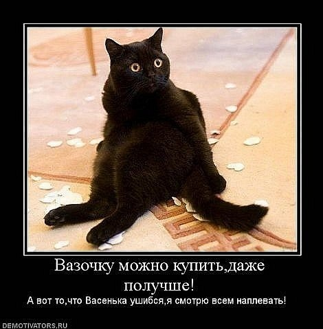 ругать кота что съел кусок колбасы