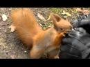 Łazienki 2011 karmienie wiewiórki