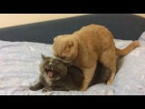 Cat Compilation March 2013 - Top 10 Countdown (Funny Cat Videos)
