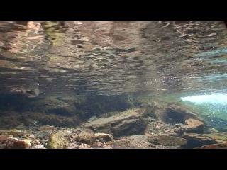 Оляпка (Cinclus) Птица-водолаз Dipper, water ouzel