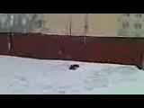 Когда много снега. Смотреть онлайн - Видео - bigmir)net