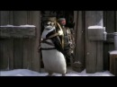 Pepsi: Пингвин, который научился летать