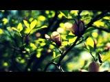Kenan Teke - Black Tulips (Original Mix)
