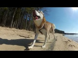 Laika at the Lake (GoPro)