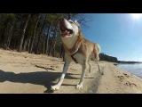 Laika at the Lake (GoPro)