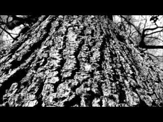 Ryan Davis - Clouds Passing By (Somfay 'Daybreak Musing Temperament' Remix)