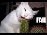 The Best Funny Animal Video on the internet - Wins & Fails