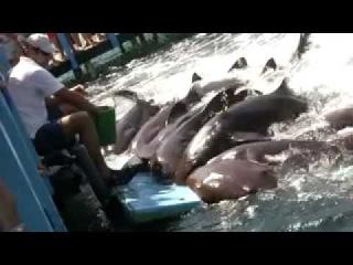 CARTAGENA: Sun, Sand and Shark Feeding Frenzy at Islas Rosario