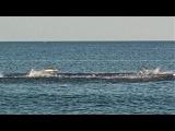 Shark Feeding Frenzy at New Jersey Shore