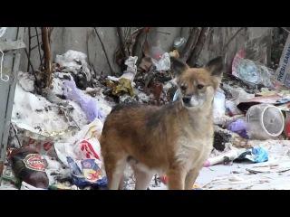 Чупакабра Харьков Помесь лисы и собаки Dogfox Kharkov