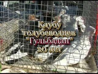 Выставка Узбекских голубей 2007 год Ташкент (3)
