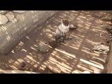 Документальный фильм - Наска(Перу) - за гранью логики (2011)