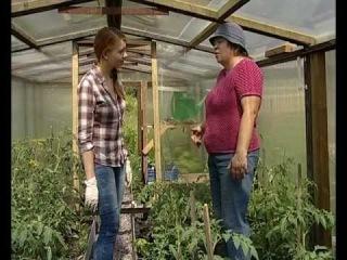 Пасынкование помидоров -  уДачные советы