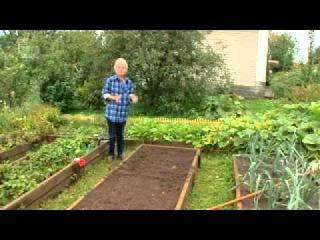 Все об выращивании моркови 02