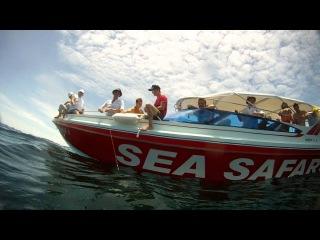 Рыбалка с катера Sea Safari