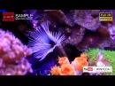 3D Full HD 水世界 觀賞 魚 觀賞魚博覽會 世貿 wnews 001