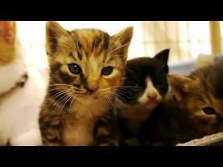 Забавные няшные котята