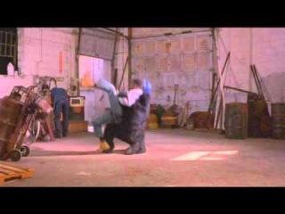 Pootie Tang Gorilla Attack
