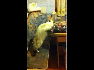 Кошка vs Торт
