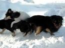 три собаки слиплись
