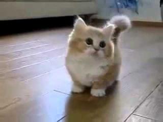 няшное видео про котят