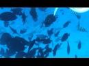 Египет под водой, рыбы, мурены
