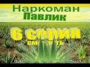 Наркоман Павлик. (5 серия) (6 серия)  добавили 5 минут назад на сайте из КОМЕНТЕА