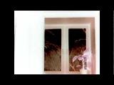 Психоделика: Скоро весна + 25 кадр.mp4