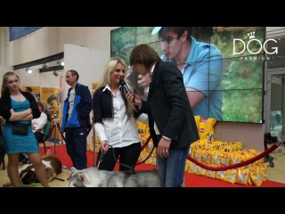 Fashion Dog TV - Интер Омск 2012